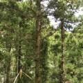 林業 伐採 木 2