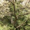 林業 伐採 木 3