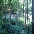 雑木林 伐採 林業 4