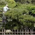 植木屋 造園 庭