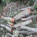 材木 林業