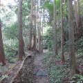林道 山林 林業 伐採